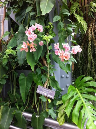 United States Botanic Garden: I enjoyed my visit