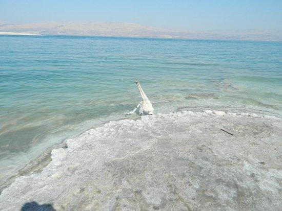 Mineral Beach : notice the salt buildup at the shoreline