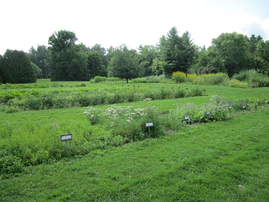 The Briars: Herb & vegetable garden