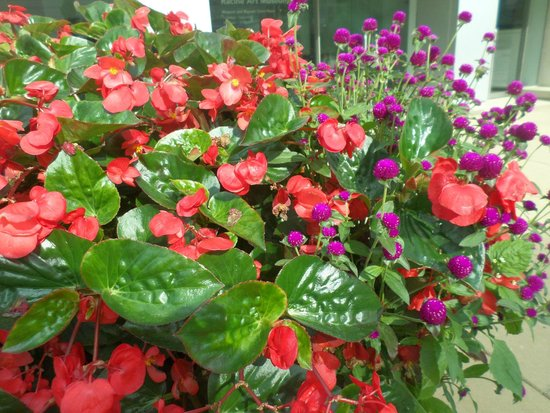 Downtown Racine: Flowers on the sidewalk