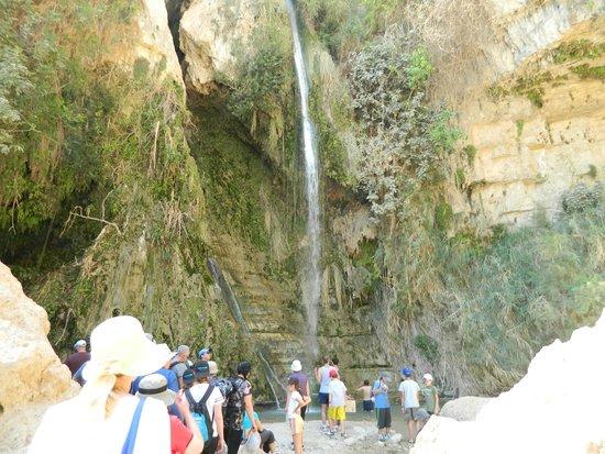 Ein Gedi Nature Reserve: the waterfall