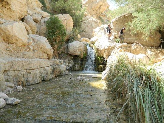 Ein Gedi Nature Reserve: beautiful spot along the trail