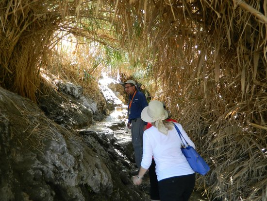 Ein Gedi Nature Reserve: nice shady area along the trail