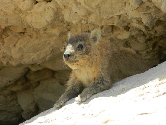 Ein Gedi Nature Reserve: These little