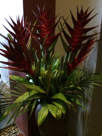 Hotel Grano de Oro San Jose: More beautiful plants