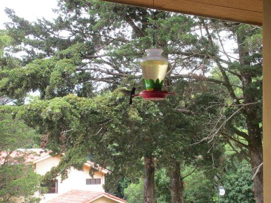 Hotel de Montaña Monteverde: Humming birds on the terrace of the restaurant