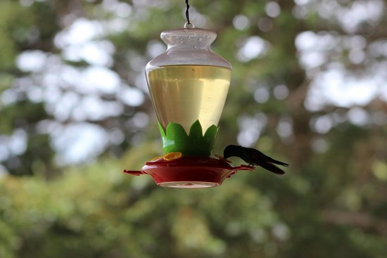 Hotel Montana Monteverde: Humming birds in the restaurant