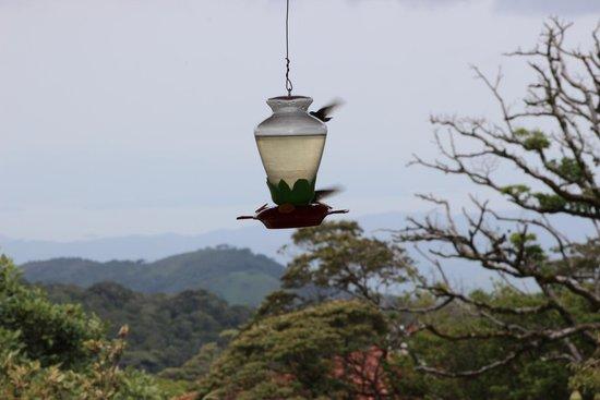 Hotel de Montaña Monteverde: Huming birds