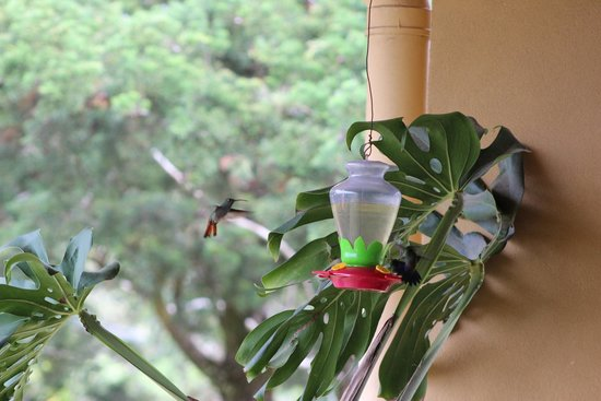 Hotel Montana Monteverde: Humming birds on the terrace of the restaurant