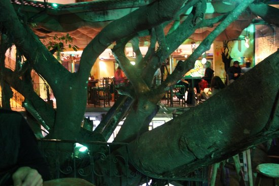 Tree House Restaurante & Cafe: The tree