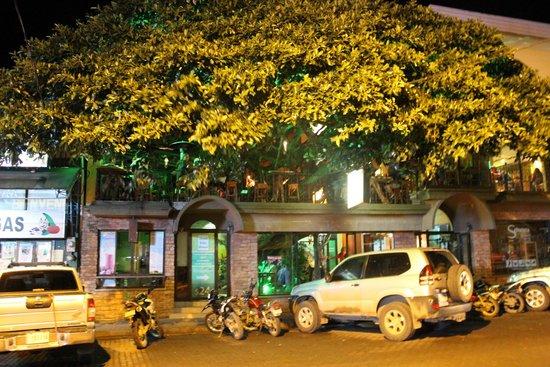 Tree House Restaurante & Cafe: Entrance to the restaurant