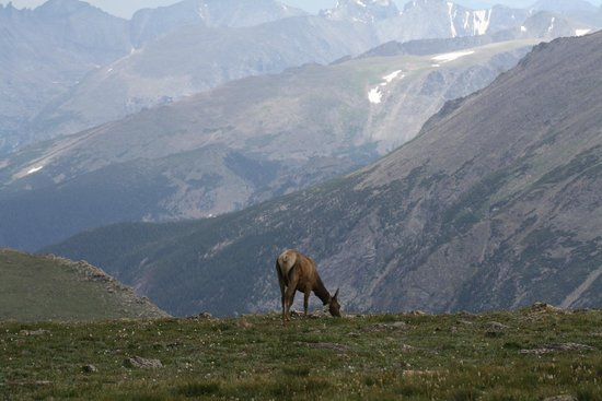 Trail Ridge Road : wildlife with view