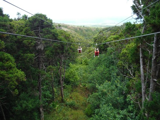 Kapalua Ziplines: One of 7 zip lines