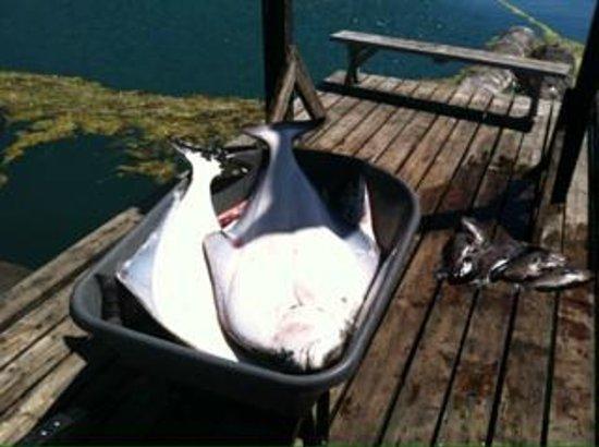 Rodgers Fishing Lodge : Nice Hali's!