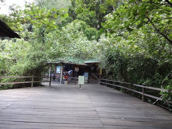 Permai Rainforest Resort: Reception