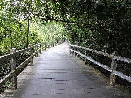Permai Rainforest Resort : Path to rooms