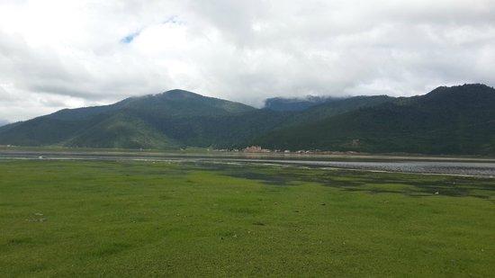 Lijiang Lion Rock : Napa Hai