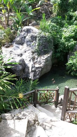 Serendipity Holistic Resort : A view of a small part of the river from up top