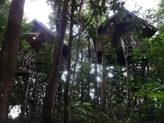 Permai Rainforest Resort: treehouse