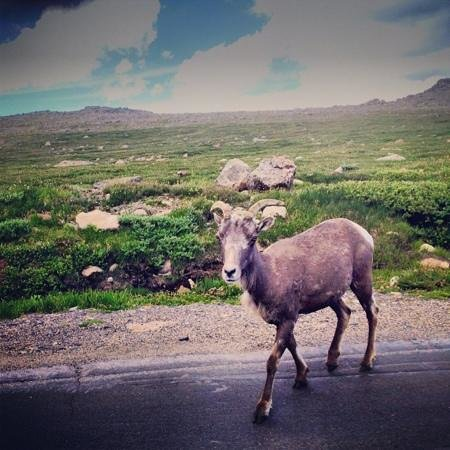 Mount Evans Scenic Byway: Totally Excited