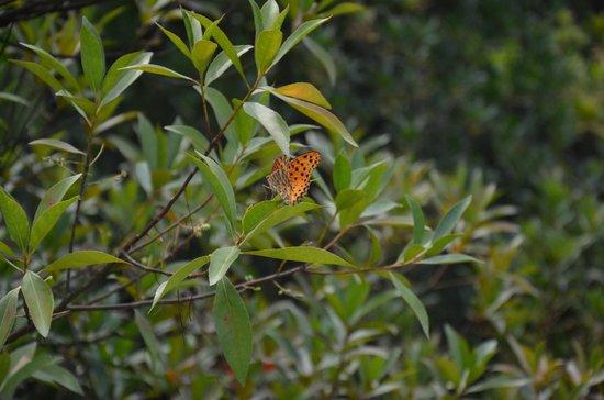 Lishui Liandu Baiyun Mountain: butterfly