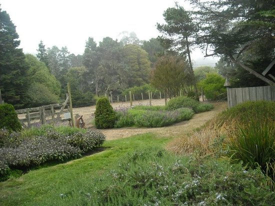 Glendeven Inn Mendocino: View from our back porch into our garden