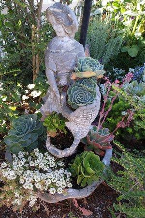Monarch Cove Inn: Succulents