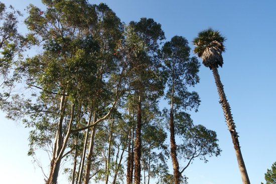 Monarch Cove Inn: I love the trees on the property surrounding the ocean