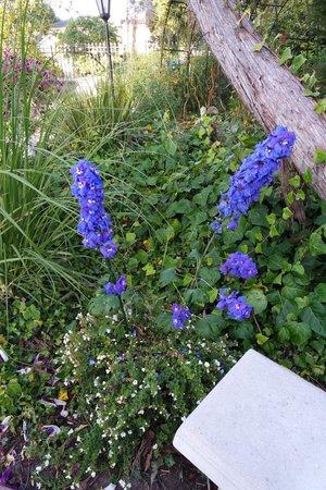Monarch Cove Inn: Flowers!