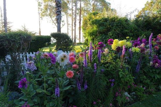 Monarch Cove Inn: Flowers