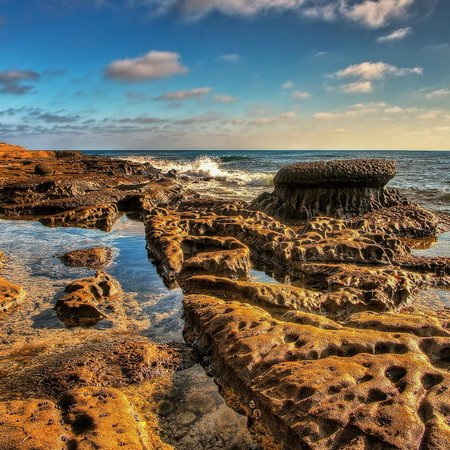 Windansea Beach : Short Fat Mushroom