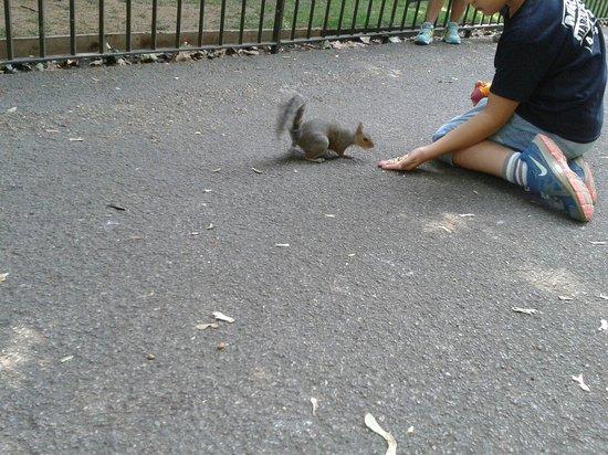 Hyde Park : Les petits écureuils pas farouches