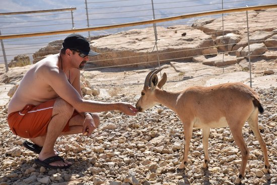 Beresheet Hotel by Isrotel Exclusive Collection: Petting a mountain goat outside our room