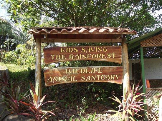 Kids Saving the Rain Forest: KSTR ON SITE