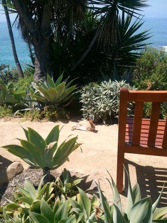 Montage Laguna Beach: Chillin' Bunny!