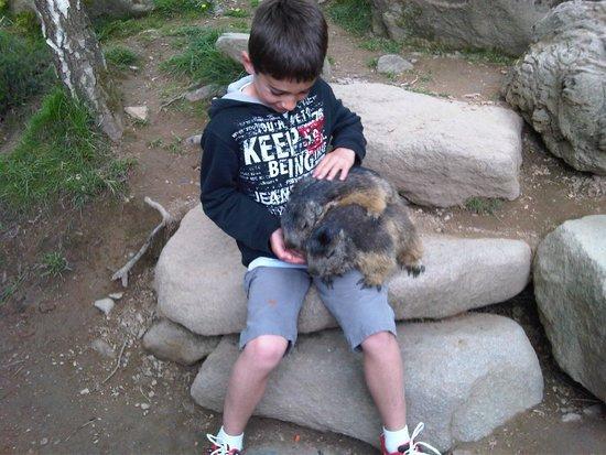 Hotel Le Picors: on nourrit les marmottes