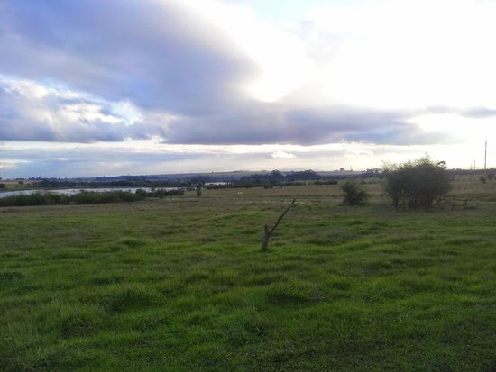Wild Clover Farm: The grasslands...