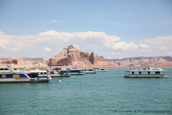 Lake Powell Resort : View of houseboats from resort
