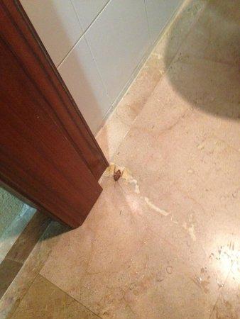 Hotel Cavanna: De las dos habitaciones que cogimos, pues éramos 4 personas,las dos tenían cucarachas.
