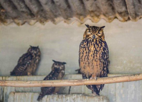 Bannerghatta National Park : Eagle Owl