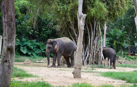 Bannerghatta National Park : Elephant