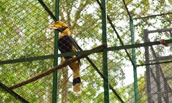 Bannerghatta National Park : Hornbill
