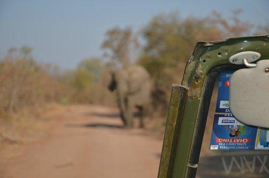 Victoria Falls River Lodge - Zambezi Crescent: Angry Elephant