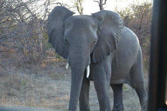 Victoria Falls River Lodge - Zambezi Crescent: Really pissed oaf elephant!!