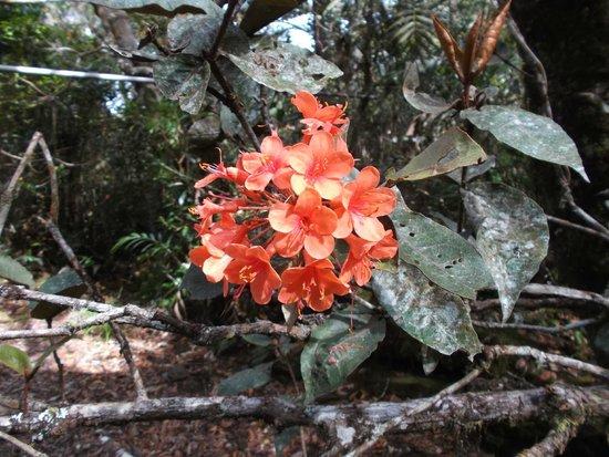 Mount Kinabalu: beautiful wildflowers