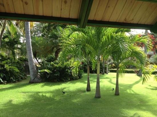 Iberostar Dominicana Hotel : view