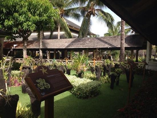 Iberostar Dominicana Hotel: stunning