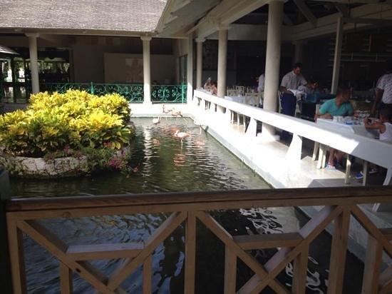 Iberostar Dominicana Hotel: flamingos