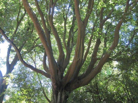 Serralves: park