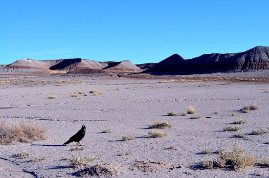 Painted Desert : в парке